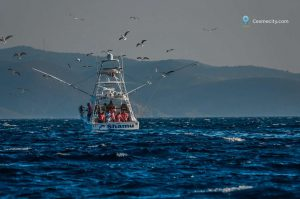 alacati-big-fish-cesmecity.com-33